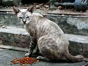 Community (feral) cats can create a number of problems for a community.