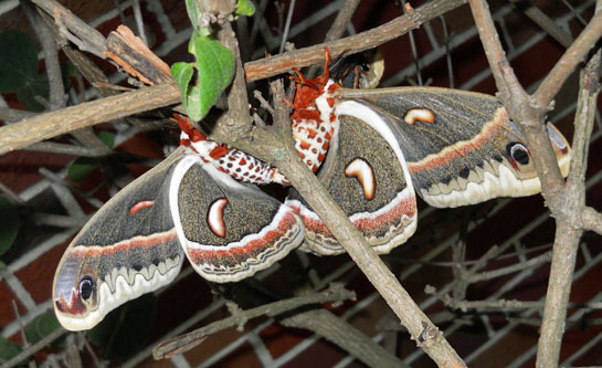 Langdon moth photo 6-2016