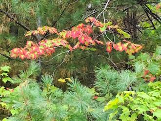 Fall scene, by Rex Dolby.