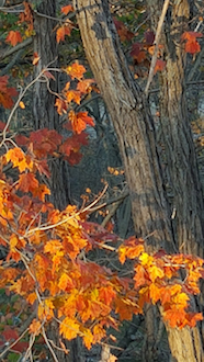 Cheryl Knost's winning fall photograph.(Photo submitted.)